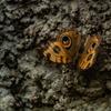 生物園の蝶たち5