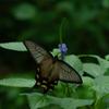 生物園の蝶たち3