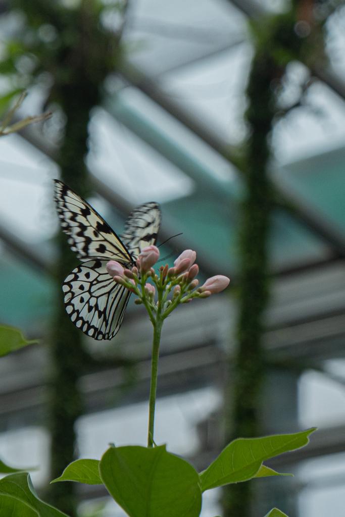 生物園の蝶たち2