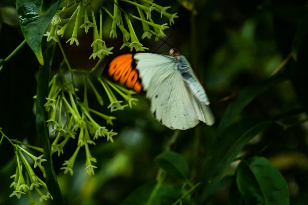 生物園の蝶たち6