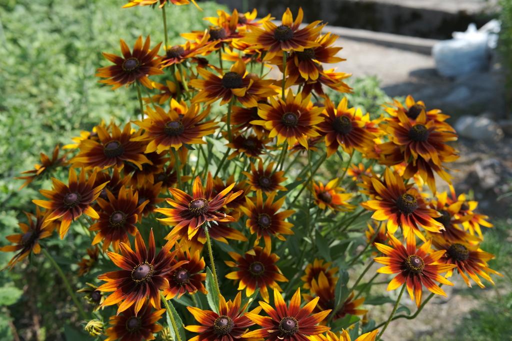 夏の到来を告げる正義の花