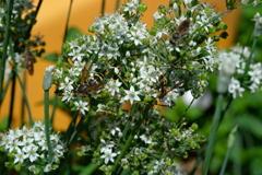 ハチさん大収穫の大運動会