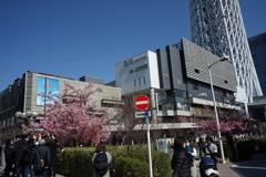 桜越しのスカイツリー