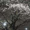 夜桜 壱ノ型