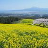 高原からの春風