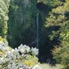 白石楠花の額縁