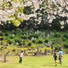 桜のメモリー