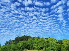 新緑と羊雲