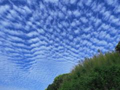 流れるイワシ雲