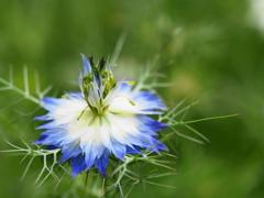 沸き立つ花~3