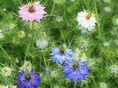 沸き立つ花~2