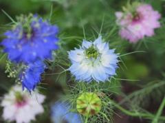 沸き立つ花~1