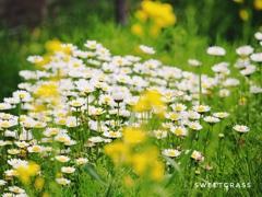 To live tough like wildflowers