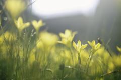花はただ咲く