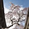 日光桜回遊2021④~鳥居の額縁?~