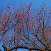 梅が香むせぶ 春の午後