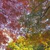 杉並木鑑賞公園の紅葉