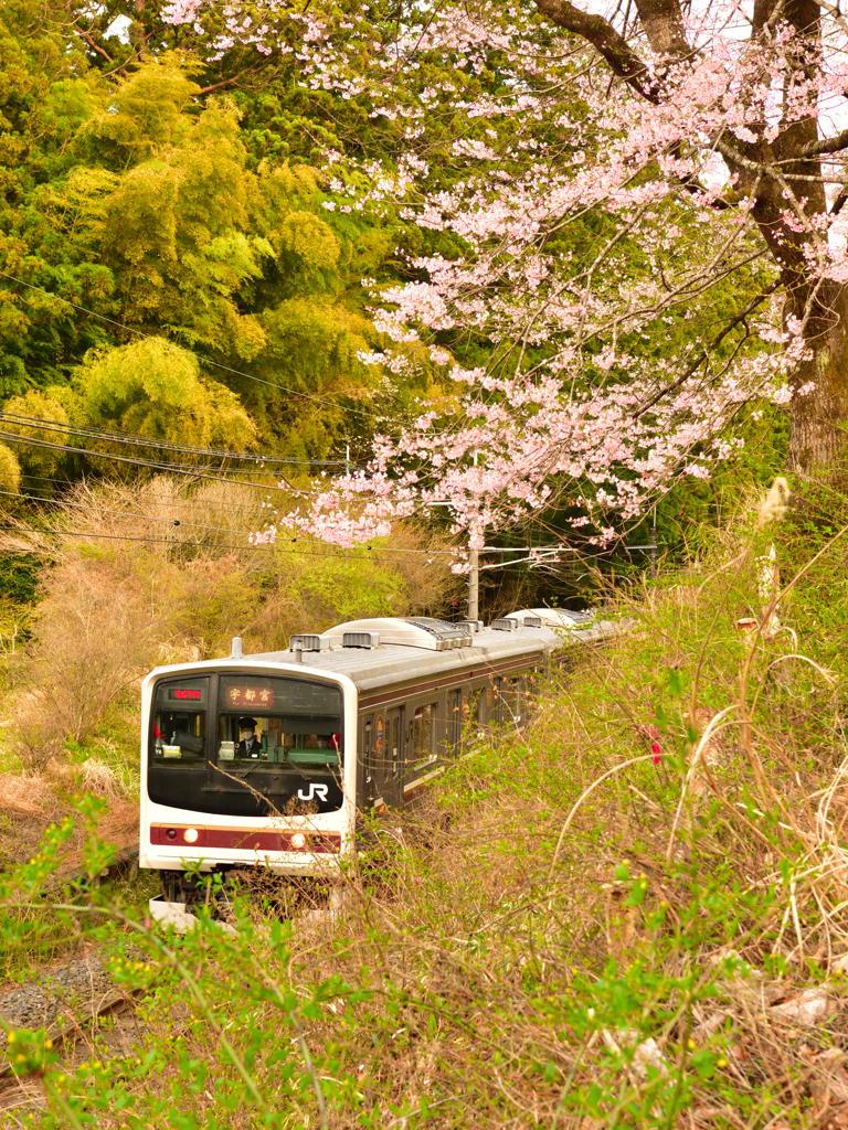 日光桜回遊2021⑥~番外・お花見列車~