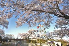 千手山公園の春