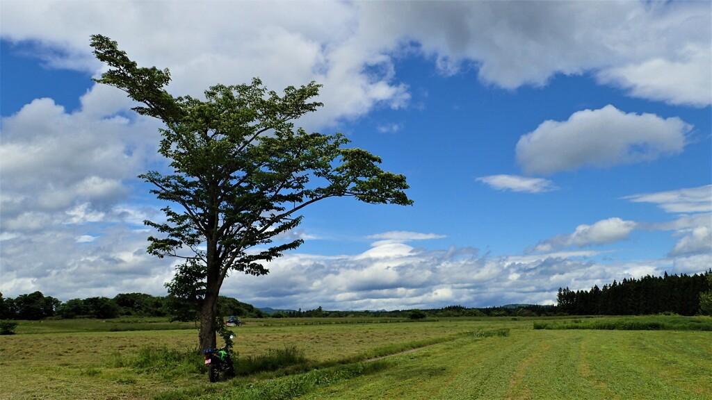 KSRと見た風景(一本の木)