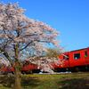 桜とタラコ色が映える