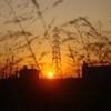 草むらから見た夕陽と鉄塔