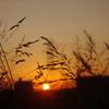 草むらから見た夕陽