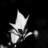 植物譜-Apr. 2020
