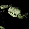植物譜-Nov. 2020