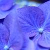 青紫の世界