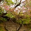 晩春の小京都