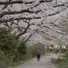 春の散歩道