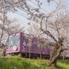 嵐電 桜のトンネル 03