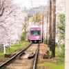 嵐電 桜のトンネル 02