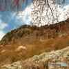 屛風岩と山桜