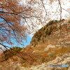 屛風岩と山桜  (2)
