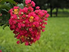 零れ落ちそうな赤い花