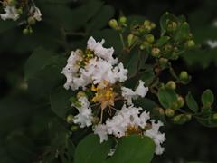 きくらげみたいな白い花