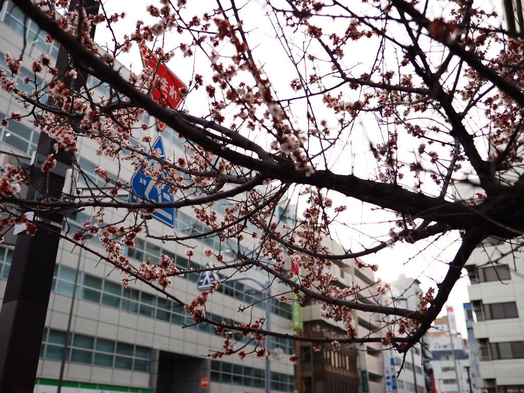 このとき桜が咲いていた