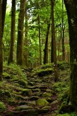 山神社登山道