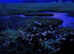 花咲く湿原