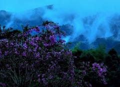 自然村の百日紅