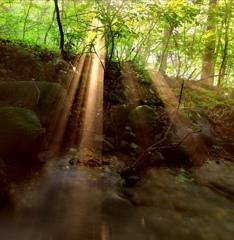 森に光走る