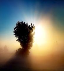 大地の目覚め
