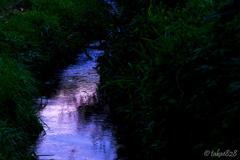 水田用水路の夕景