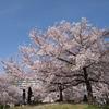 日本の四季の魅力