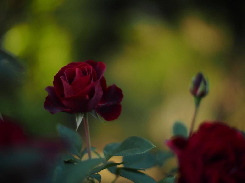 天鵞絨の赤