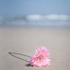波打ち際の花