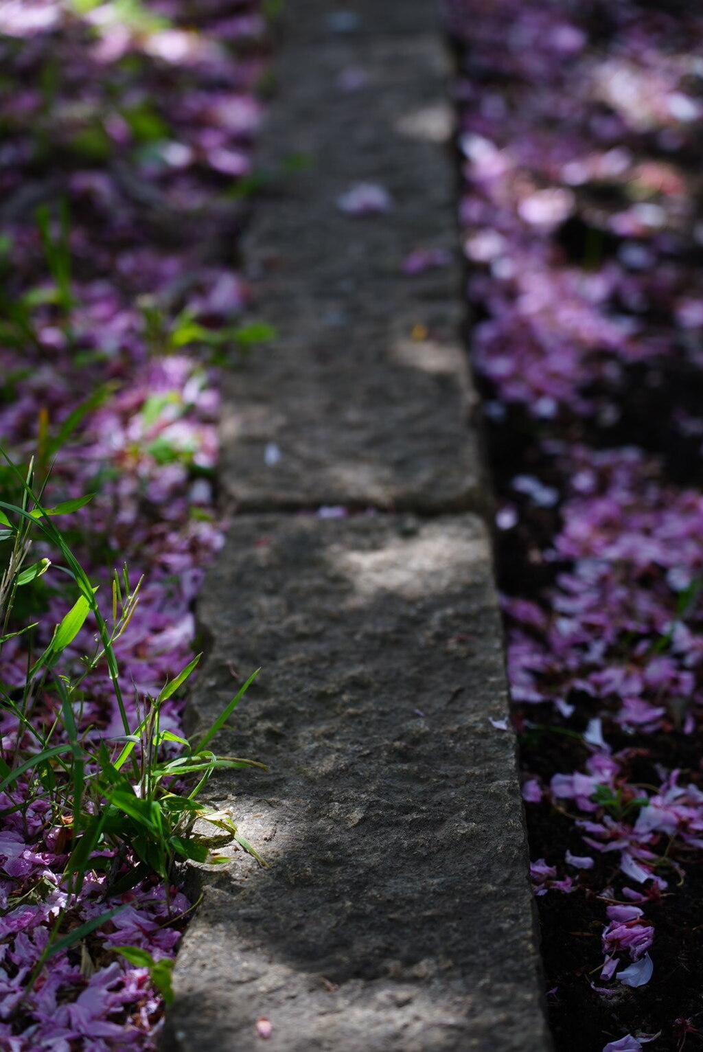 桜の花びらと草、そして石