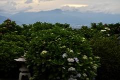 灯籠と紫陽花、そして北アルプス